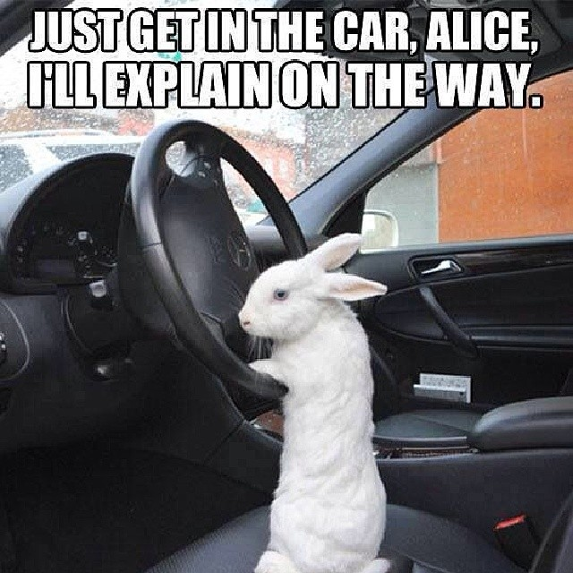just get in the car Alice I will explain on the way