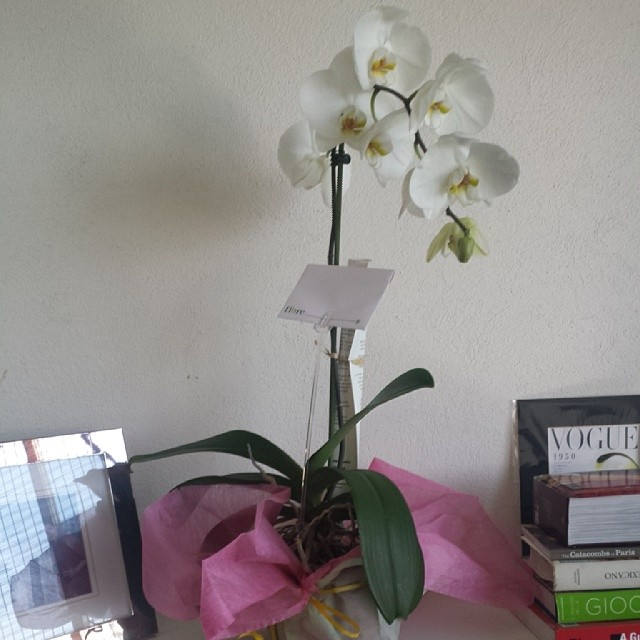 orquidea vilrandir