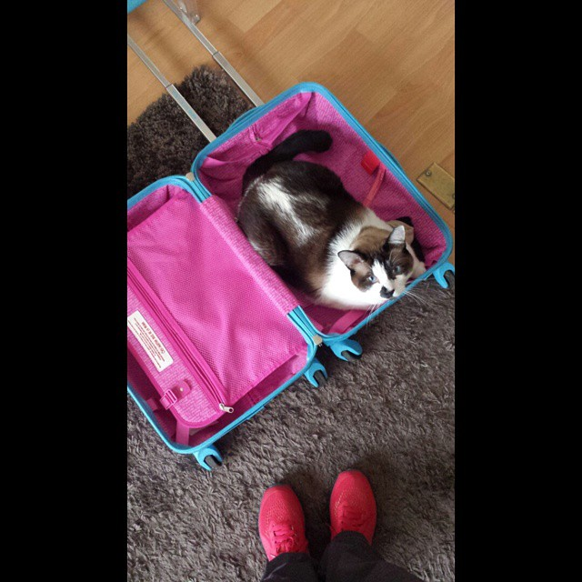 cat bagage