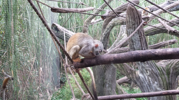 13 zoo de cali