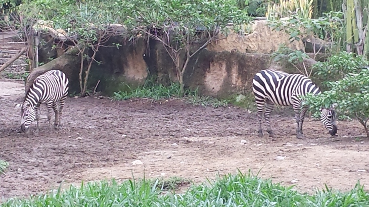 16 zoo de cali