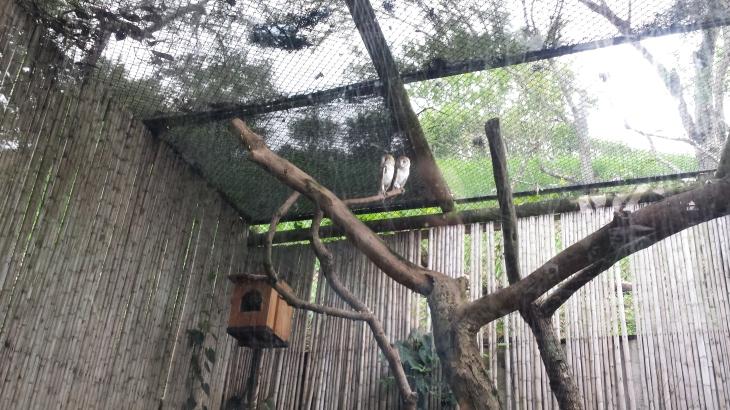 19 zoo de cali