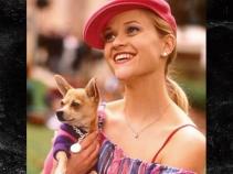 0311-legally-blonde-dog-dead-instagram-01-1200x630